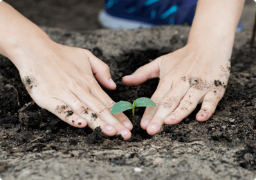 Photo of hands planting a seedling